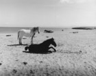 Horses on a beach on Inis Oirr_thumb.jpeg