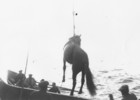 Aran horse being hoisted onto steamer_thumb.jpeg